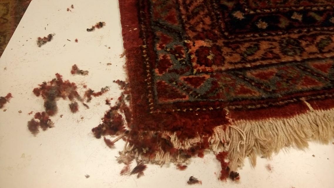 restauracion-agujero-alfombra-29